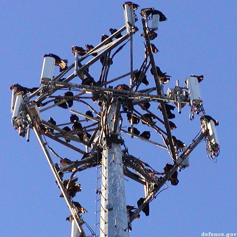 Vultures roosting on cell tower